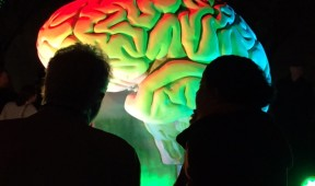Silhouettes of Rob Shakespeare and Amy Brier with bright-colored light on limestone brain in the background.